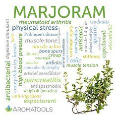 Essential Oil Spotlight: Marjoram