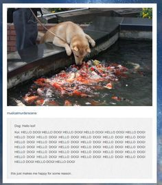 Funny pictures about Hello Koi. Oh, and cool pics about Hello Koi. Also, Hello Koi. Funny Cute, The Funny, Hilarious, Tumblr Funny, Funny Memes, Funny Shit, Funny Stuff, Funny Animals, Cute Animals