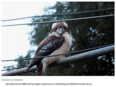 BIRDS.   29 Times Australians Were The Realest On Tumblr