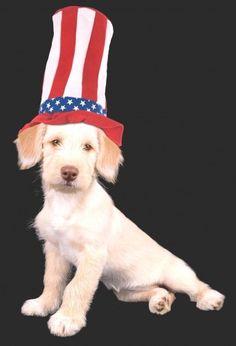Patriot Dog! #BIONIC www.bionicplay.com