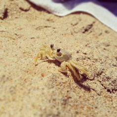 Southern Shores in Southern Shores, NC. Don and I first saw these little buggers in 1993.
