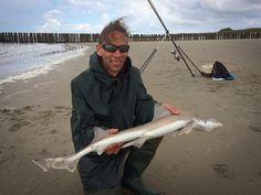 Glatthai Holland Brandungsangeln Walcheren Hai, Am Meer, Holland, Solar, Pictures, Sea Bass, The Nederlands, The Netherlands, Netherlands