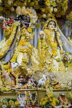 Radha Madhava Mayapur, Vasanta Panchami 2015