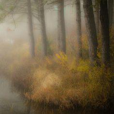 Chorale de pins sur la rive du lac... l'automne jubile... une autre belle journée...!!!