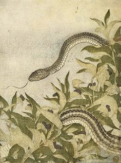 Happy Chinese New Year – Year of the Snake! Japanese Drawings, Japanese Artwork, Japanese Painting, Japanese Prints, Snake Art, Rat Snake, Snake Painting, Year Of The Snake, Beautiful Snakes