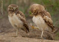 OMG, a FOOT!!! by Henrik Nilsson on 500px