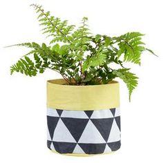 Garden & Outdoor | Kmart Cacti And Succulents, Outdoor Gardens, Planter Pots, Sweet Home, Home And Garden, Church Ideas, Yellow, Pouches, Green