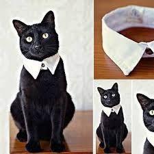 Risultati immagini per collari gatto