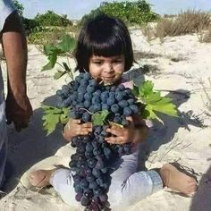 Stop this nonsense war. We have children to grow and fruits to harvest In the picture (via Abdullah M AL Sharki), a child in #Saada