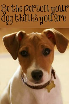 ••♦dog quote♦••  Prodotti per cani: http://www.pacopetshop.it/Cani/11/33065/