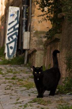 Black Cat                                                                                                                                                                                 Mais