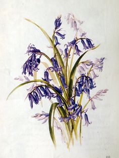 """Botanical Illustrations  by Siriol Sherlock, ISBN 071348862 (why can't APA/MLA be just the isbn? """"orz) in watercolour  lightbox it please. I..."""