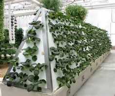 Epcot Hydroponic Garden - Bing Images