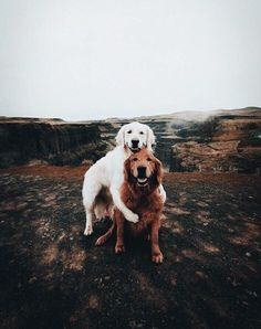 Future dogs