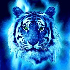 blue Tigers - Google Search