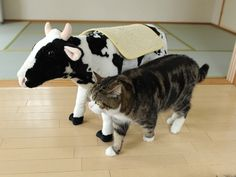 Your daily dose of Maru.