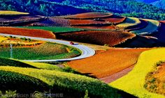Top destinations in China for autumn photography:Colorful terraced fields in Dongguan, South China's Guangdong province, captured by amateur photographer Zhang Ning when traveling across China. [Photo/IC]