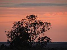 Eucalyptus sp. - Fotografia Ansiolítica