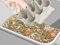How to Raise Mealworms: 15 Steps (with Pictures) - wikiHow