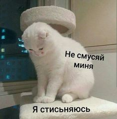 Cute Cat Memes, Cute Love Memes, Funny Cats, Funny Memes, Jokes, Pictures With Meaning, Hello Memes, Sweet Memes, Russian Memes