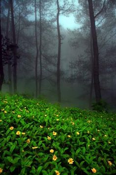 a magic forest What A Wonderful World, Beautiful World, Beautiful Places, Beautiful Pictures, Amazing Nature, Wonders Of The World, Scenery, Places To Visit, Around The Worlds