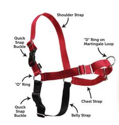 Is the Premier Easy Walk Harness Right for Your Dog?