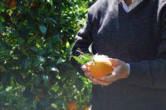 #MicraAttitude #Italia  attività stimolanti ,agrumicoltura