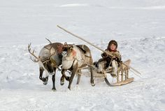 Paedavyaku, a Nenets boy, drives a reindeer sled near his family's winter camp in the Yamal. Western Siberia, Russia