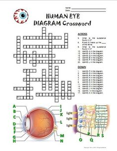 Puzzle diagram crossword example electrical wiring diagram female reproductive system crossword with diagram editable rh pinterest com crossword puzzles medium level crossword puzzles medium level ccuart Gallery