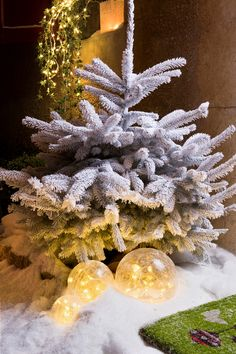 Christmas outside   ambience, styliste Philippe de Stefano for botanic