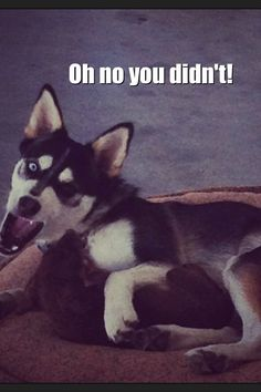 Oh no you didn't Husky attitude