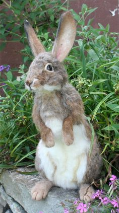 OOAK Needle felted Alpaca Life Size Cottontail Bunny by SteviT