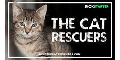 the-cat-rescuers-film