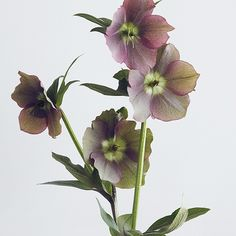 putnamflowers's photo on Instagram