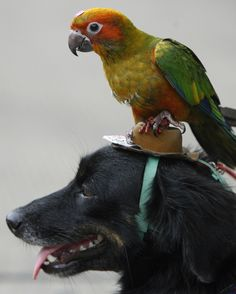 Adorable Parrot and Dog - Chaiwat Subprasom / Reuters