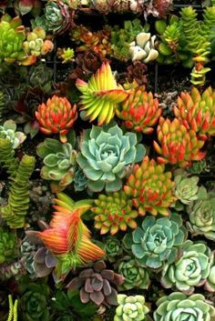 The succulents are gorgeous. The range of colors is outstanding. Makes me want to try more succulents.