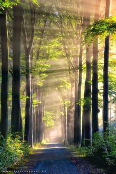 """Incredible Photography Of """"Morning Light In Forest"""" By Bart Ceuppens. …"""