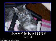 'Ya pith me off .. gid wid of da widdle yapper cuz ib da cute widdle kitty's nut got a happeez ... no bodeez gonna hab a happeez eberz!!! ... or sleep!!'