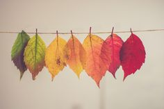 Spectacular Fall in all colours, coming to you soon by courtesy of Canada. Photo by Chris Lawton on Unsplash