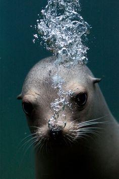 Cute seal