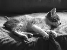 Manx kitten by Glee Devereaux @ flickr   ~ my neighbours had manx cats, years ago. One female, called Tat, was very friendly and adventurous!