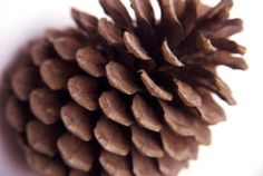 How To Make Bird Seed Stick To A Pine Cone Without Peanut Butter