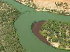 Murray River Toxic Algae Bloom Now Stretching over 1,400 kilometres. Would you drink this? Spirulina is also potentially a toxic algae that can produce #BMAA linked to #Alzheimers #ALS #MND #PD #MS