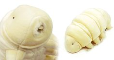 """If you haven't read up on tardigrades, or """"water bears"""" as they're more commonly known, take a few minutes and familiarize yourself with the microscopic creatures that are nearly indestructible. Then you'll understand why you must own this adorable stuffed version."""
