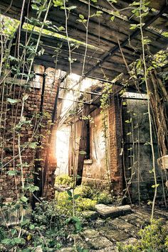 Poveglia by U1D2X, via Flickr ~ abandoned island near Venice