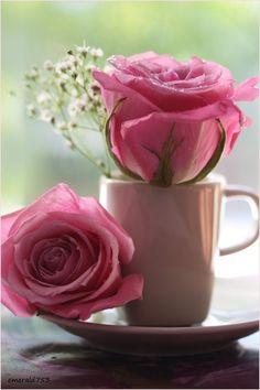 flowersgardenlove:  Rosie. Flowers Garden Love