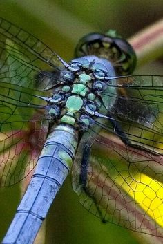 Eastern Pondhawk Dragonfly Close-up by Dah Professor. - Science And Nature Dragonfly Insect, Dragonfly Wings, Dragonfly Tattoo, Insect Art, Dragonfly Symbolism, Dragonfly Images, Beautiful Bugs, Beautiful Butterflies, Beautiful Creatures