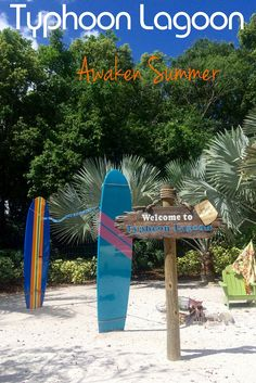 The water parks at Disney are the perfect way to cool off on a hot summer day in Orlando. Get the very best tips for visiting Typhoon Lagoon at Walt Disney World.
