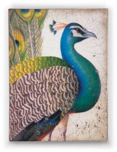 A new Spring 2013 Sid Dickens new tile. Fits my fascination with peacocks! #peacocks #SidDickens
