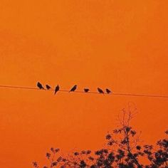 Birds on a wire, orange background Orange Aesthetic, Rainbow Aesthetic, Aesthetic Colors, Aesthetic Pictures, Aesthetic Grunge, Aesthetic Makeup, Orange Pastel, Orange Color, Orange Sky